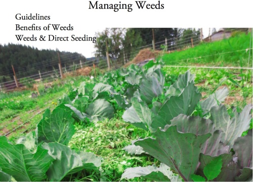 managing weeds cover