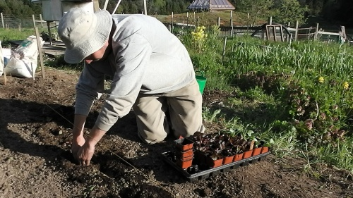peter planting