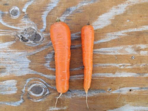carrot compare