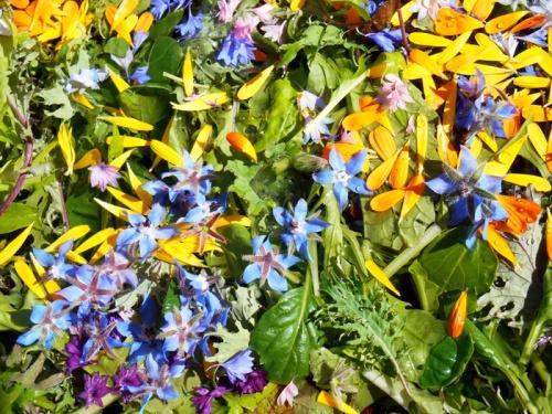 floral salad mix