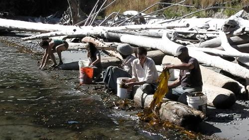 seaweedharvesting