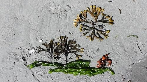 seaweedscape